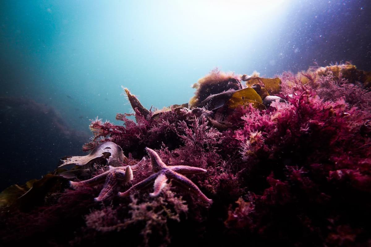Denizaltı Fotoğrafı